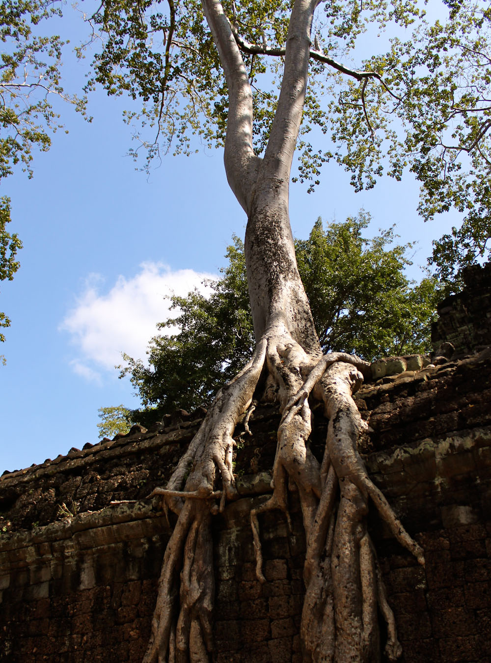Ta Prohm Siem Reap Cambodia-16