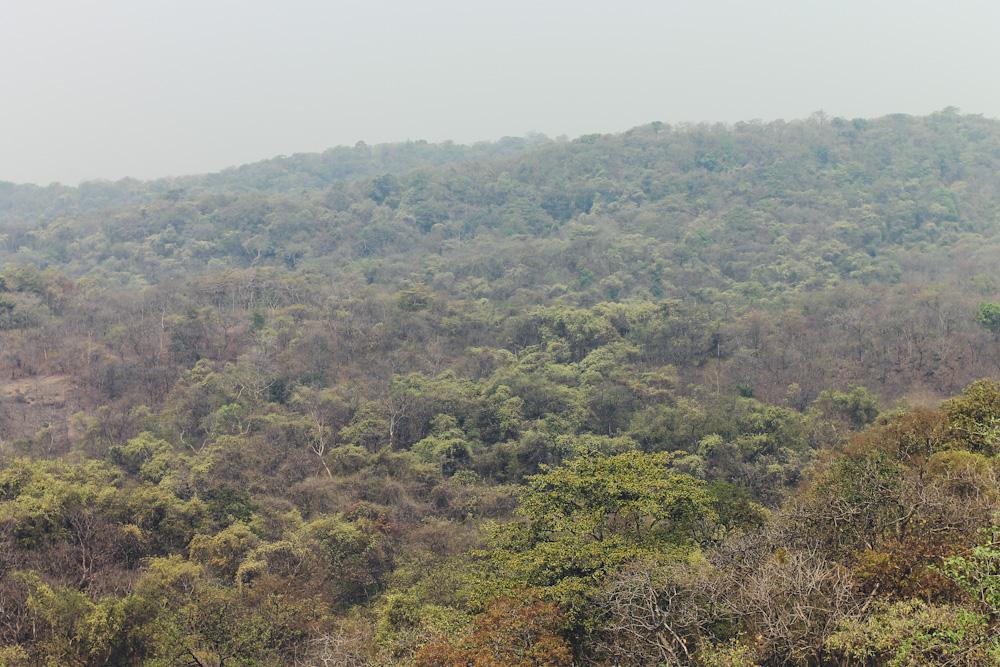 Sanjay Gandhi Natinal Park Mumbai-66