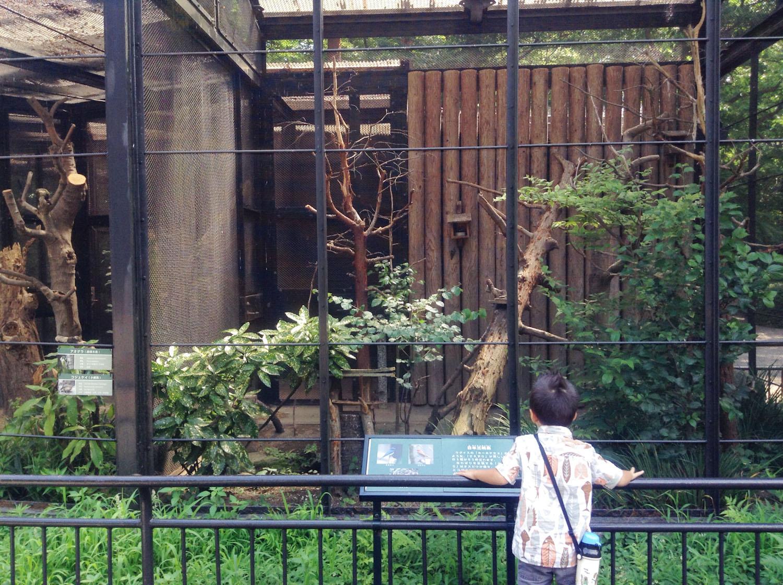Inokashira Park Zoo-18