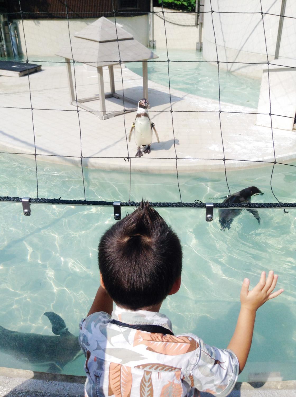 Inokashira Park Zoo-47