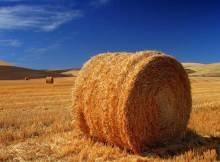 terreno_agricolo