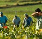 immigrati-in-agricoltura
