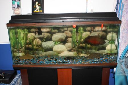 2 Oscar Fish 55 Gallon Tank My 55 Gallon Tank Setup 3
