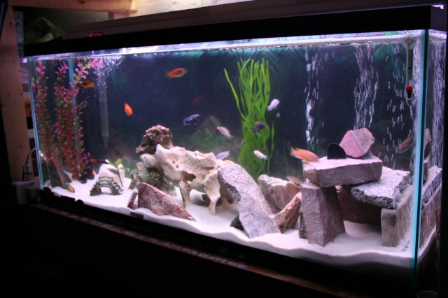 Fish tank decorations homemade how to make homemade fish for How to decorate fish tank
