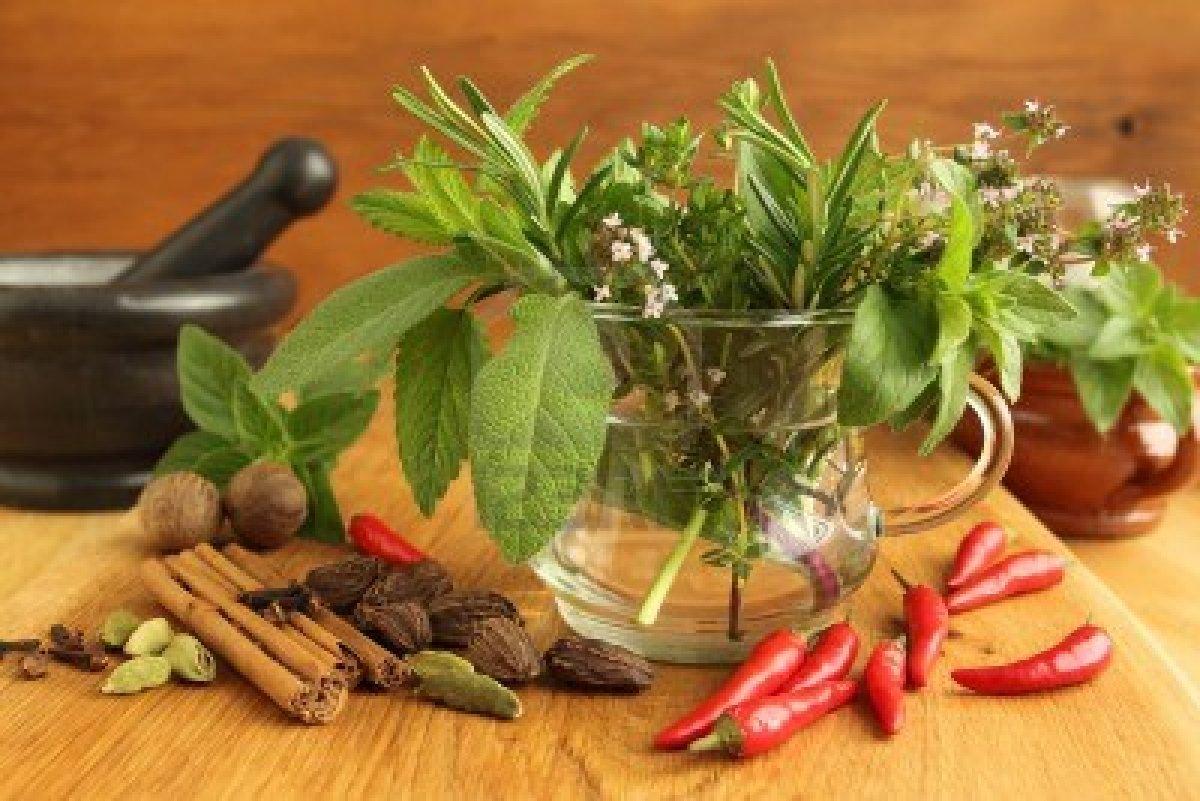 Hierbas aromaticas ciencias naturales online for Plantas aromaticas en macetas