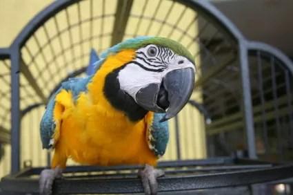 animal-compania-pajaros-mascota-3