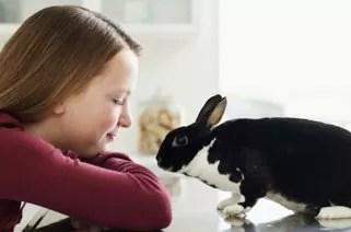 animal-compania-pequenos-mamiferos-mascota-2