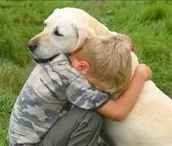 animal-compania-perro-mascota-1