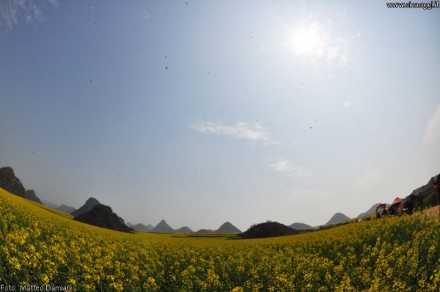 luoping_flowers_yunnan_008