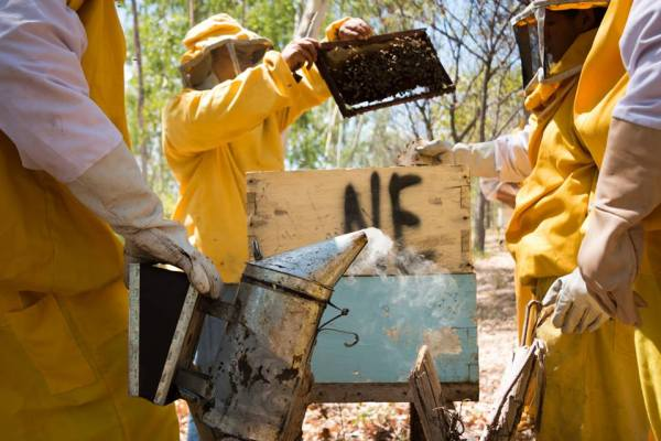 Beekeeping in Nicaragua , where workers inspect their hives.