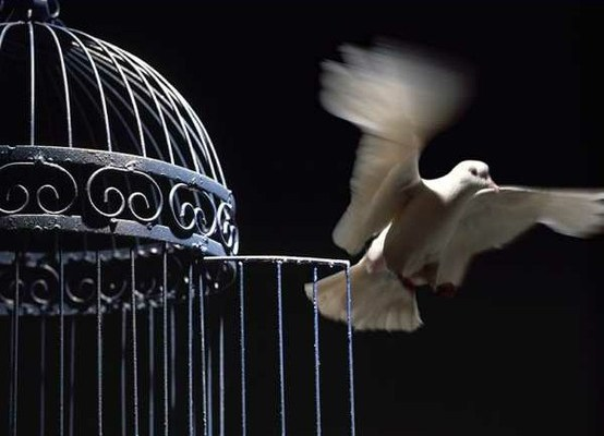 Trusting institutions or not, symbolized here by a dove leaving a cage.