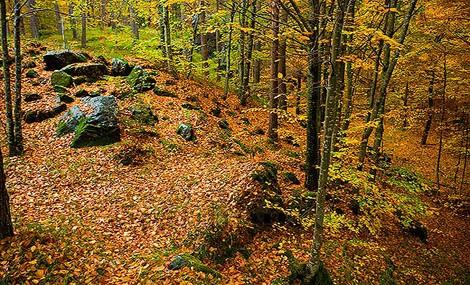 Il progetto Robinwood salva le nostre foreste