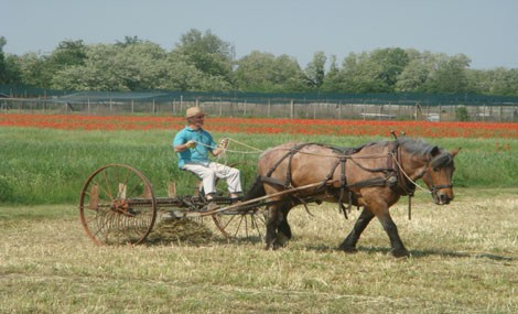 Una vita ecocompatibile in stile Amish