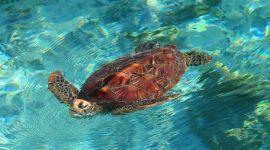 Sciacca ospita due nuovi nidi di tartaruga