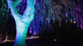 Illuminazione per riqualificare giardini e spazi verdi