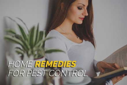 Home_Remedies_for_Pest_Control_1