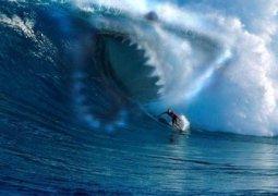 surfista-tubarao