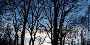 trees-sunset-1513708