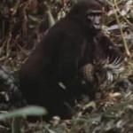 mogambo-1953-01-26-59280