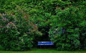 park-2733655_1280sghf