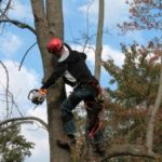 Seven benefits of getting tree removal services