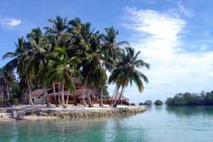 indonesia_palm