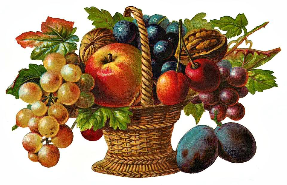 Victorian Fruit Basket Clipart