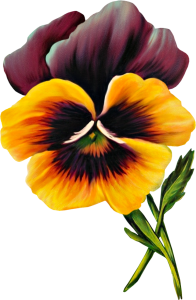Free Vintage Pansy Graphic
