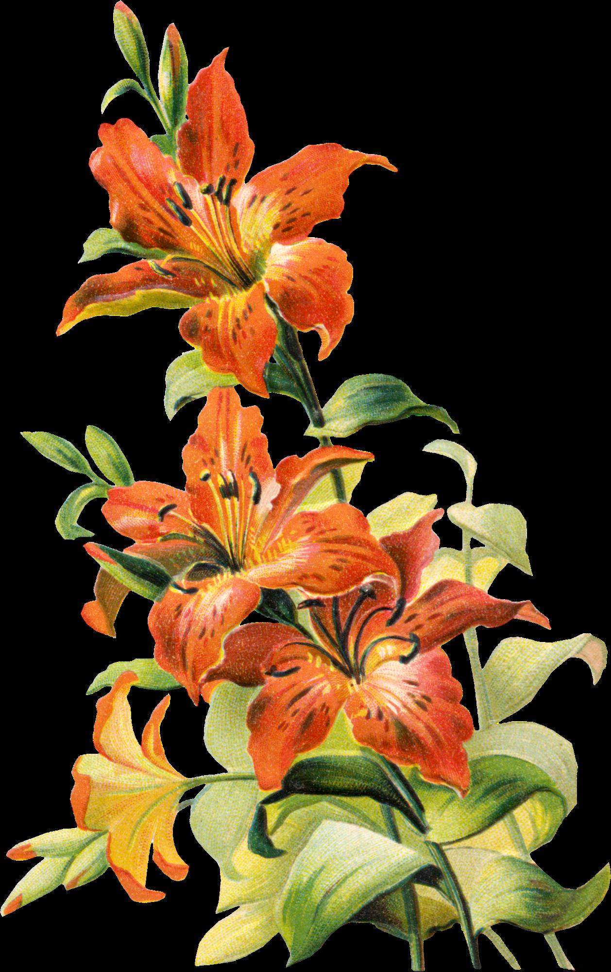 Free vintage tiger lily flower izmirmasajfo