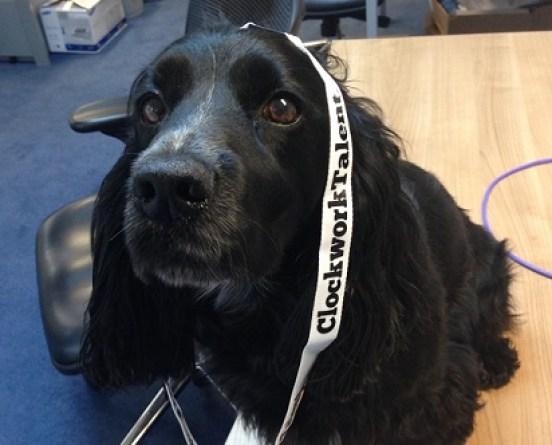 Office Dog w Lanyard
