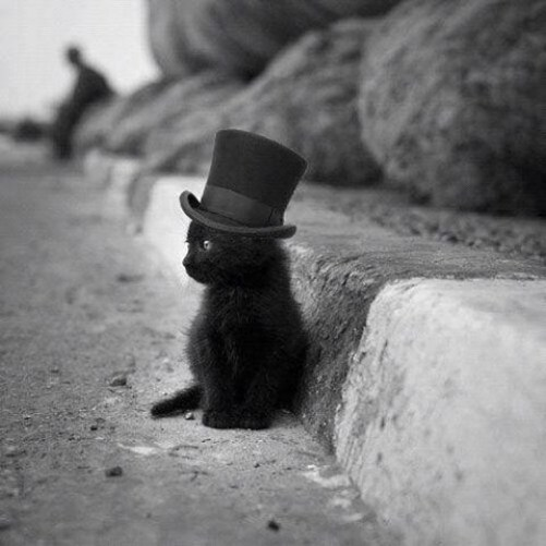 Black Cat in a bowler hat at the side of the road