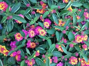 clonakilty-garden-centre