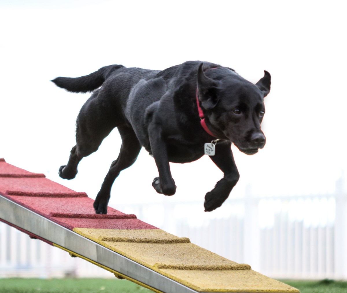 Dog Agility Classes