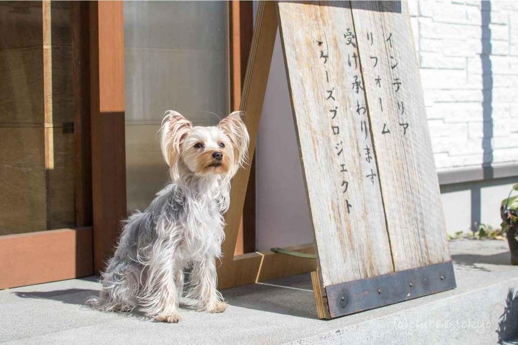 ヨークシャーテリア リノベーション 看板犬 リフォーム ケーズプロジェクト
