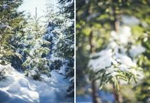 Iarna la Paltinis: foto cu Canon 6D