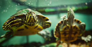 Gay Turtle Experiment Demonstrates Ridiculous Levels of Homophobia in Turkey [Video]
