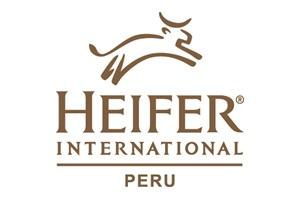 heifer_peru_300x200