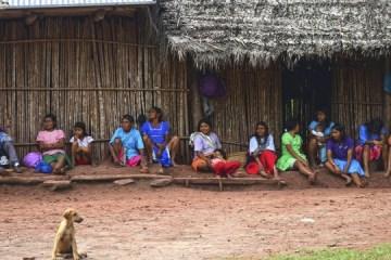conferencia en linea aporte indigena