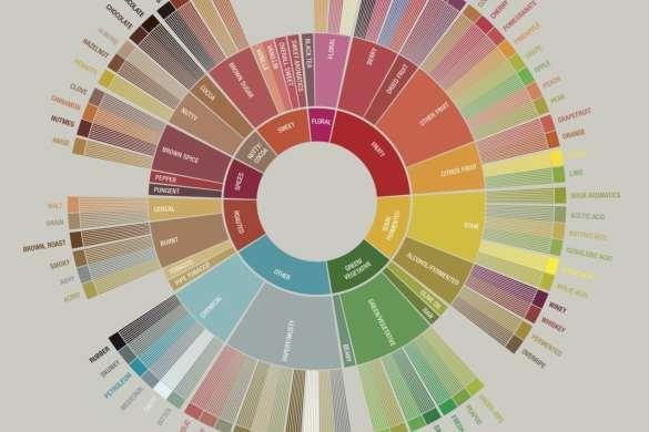 SCAA Coffee Taster's Flavor Wheel