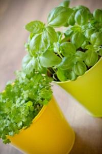 Tre enkle og nyttige urter for balkongen