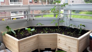 planter_box_with_plants