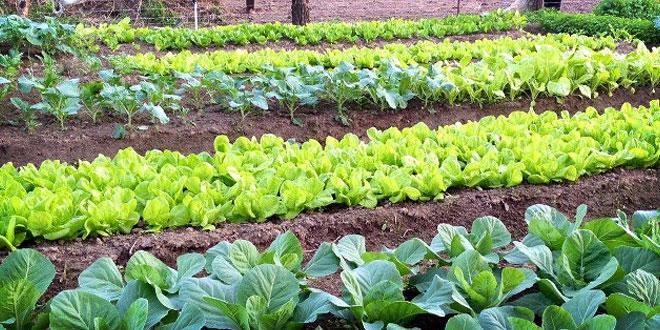 Curso te rico pr ctico huerta org nica en el centro for Plantas para huerta organica