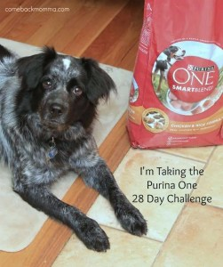 Panda Takes the Purina One 28 Day Challenge