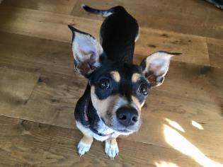 Jake's Wish foster dog Daisy