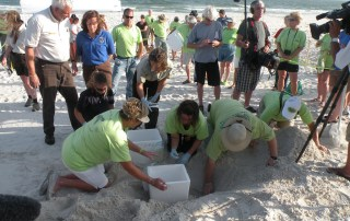 volunteer turtles