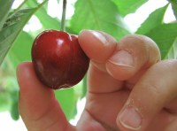 compliance and cherry picking