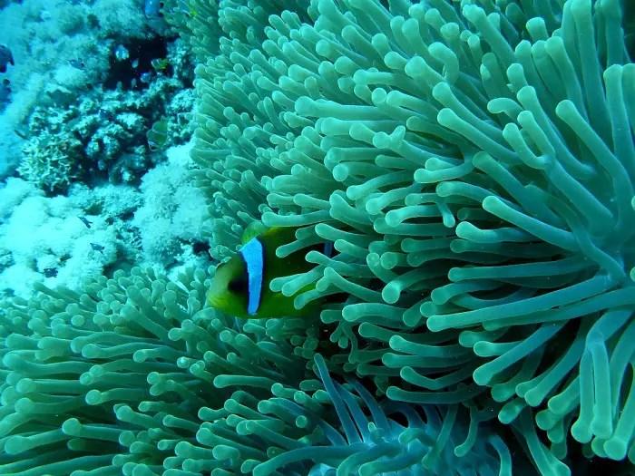 4. scuba diving
