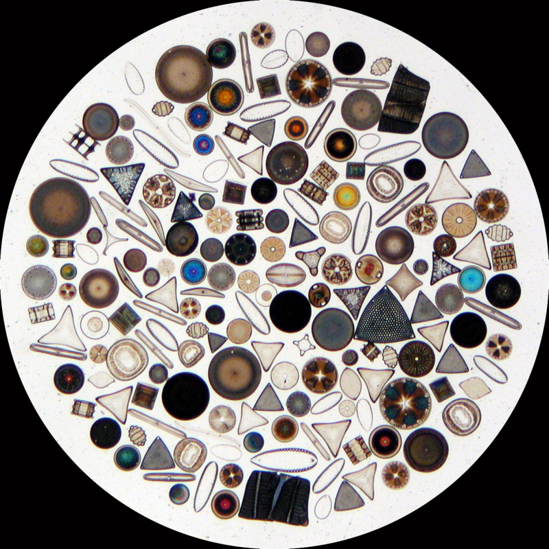 Diatoms, the smallest of sea plankton