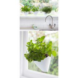 Debonair Garden Ideas Hang Your Plants From Ceiling Walls Seplanters Garden Idea Hang Your Plants From Ceiling Walls Wall Herb Garden Diy