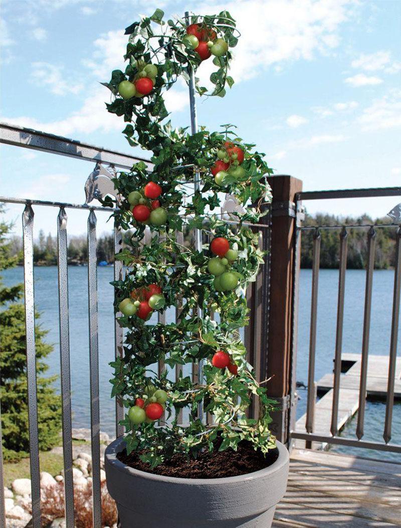 Large Of Vegetable Vertical Garden